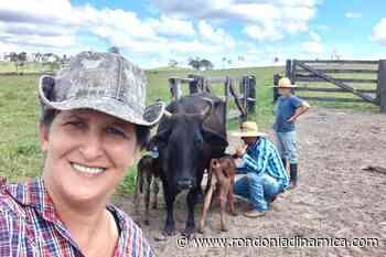 No município, vaca pare bezerros gêmeos de sexos diferentes e surpreende donos de sítio - Rondônia Dinâmica