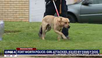 Four-year-old mauled to death by dog