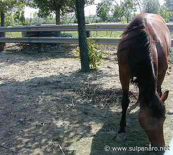Giovane cade da cavallo al centro ippico di Soliera - SulPanaro | News - SulPanaro