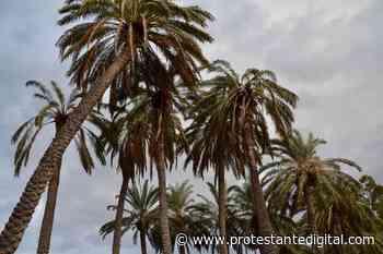 Las altas palmeras de Jericó - Protestante Digital