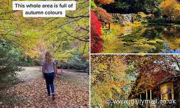 Inside the stunning gardens only two hours from Sydney's CBD that glow orange in the autumn