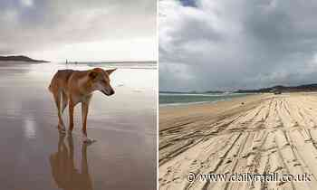 Second toddler has been bitten by a dingo at Orchid Beach on Fraser Island in QLD