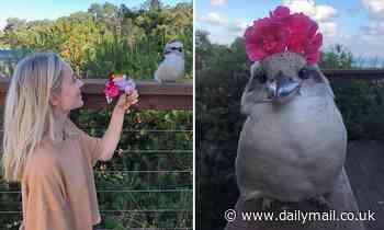 Surf Coast, Victoria woman shot to TikTok fame posting videos of Australian birds