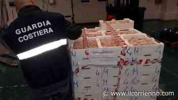 Torre del Greco, 200 chili di pesce a rischio in un deposito: scatta il sequestro - Sanzionato il titolare della pescheria - IlCorrierino.com