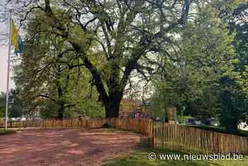 Hekken moeten zowel bomen als parkbezoekers beschermen (Dilbeek) - Het Nieuwsblad