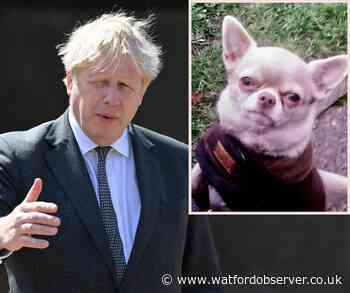 Boris Johnson backs pet theft task force - amid rise of dog thefts in Herts - Watford Observer