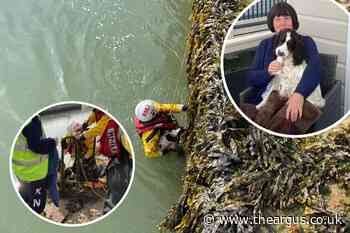 Puppy rescued after falling six metres into river Rother, Sussex