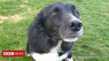 Doune dog had 5cm stick embedded in eye socket