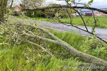 Stormschade in Mechelse regio en Rupelstreek blijft voorlopig beperkt
