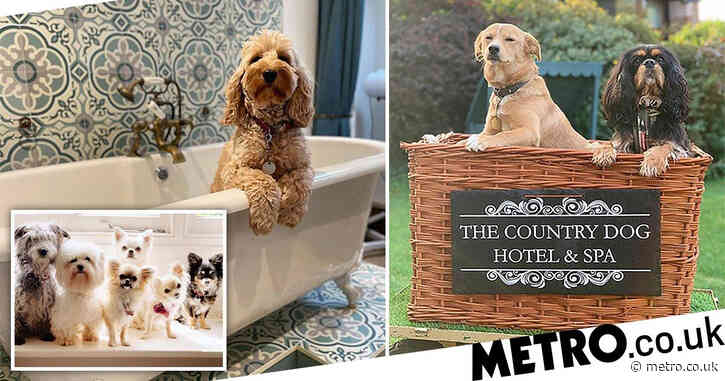 Luxury dog hotel enjoys booming business over lockdown