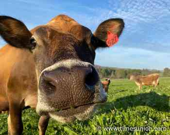 Can grass-fed cows save Hudson Valley's small dairy farms?