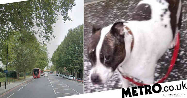 Woman punched to ground 'by thieves who stole her terrier'