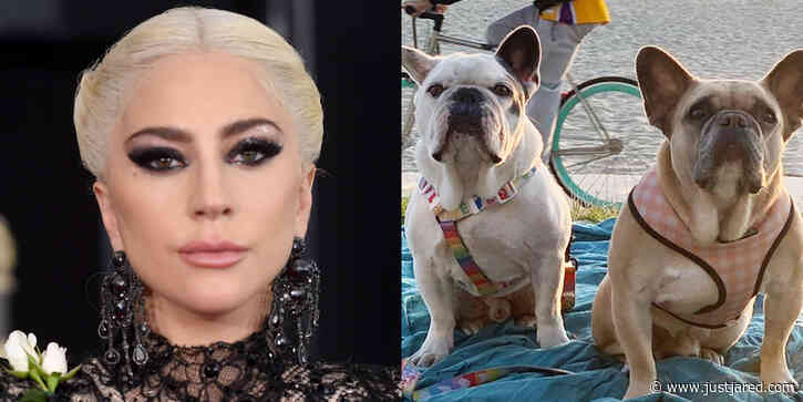 Men Who Stole Lady Gaga's Dogs Did Not Know They Belonged to Her - New Details Revealed