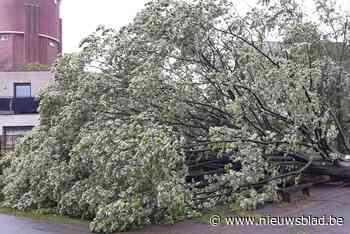 Stormschade in Mechelse regio blijft beperkt ondanks hevige windstoten