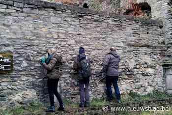 Unieke vondst in Sint-Baafsabdij: zeldzame korstmos werd nooit eerder gezien in België