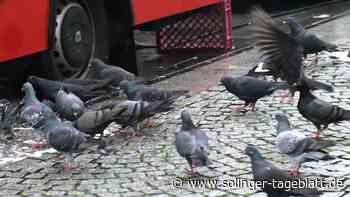 Am Hauptbahnhof in Ohligs soll ein Taubenhaus entstehen