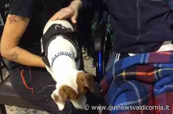 Pet visiting nella Rsa, lanciata la proposta - Qui News Valdicornia