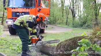 Feuerwehr wegen Sturm im Einsatz