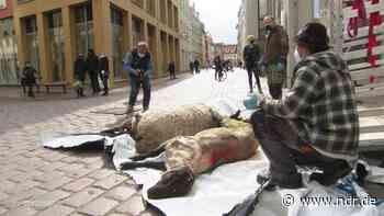 Stralsund: Tote Schafe als Protest gegen Ausbreitung der Wölfe - NDR.de