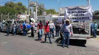 Se manifestaron productores lecheros de las regiones Altos y Ciénega de Jalisco - UDG TV - UDG TV