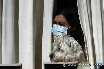 ¿Pueden los perros curar la soledad? Confinamiento dispara interés de personas por adoptar perros como mascotas de compañía, lo que no siempre es buena idea - La Tercera