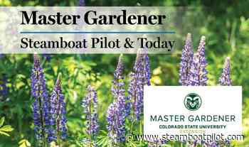 Master Gardener: What is Plant Select? | SteamboatToday.com - Steamboat Pilot and Today