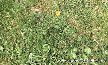 The Citizen Gardener: No Mow May - Hackney Citizen
