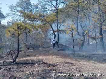 Alarmó incendio forestal en Tlaxiaco - Diario Marca de Oaxaca