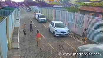 DF: dono de shih-tzu atacado por dois cães ameaça vizinhos com arma - Metrópoles