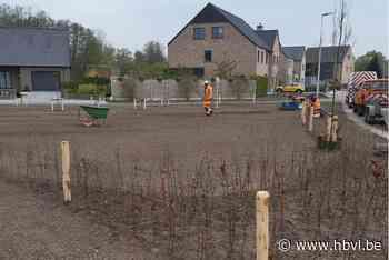Nieuw plantsoentje in Lozen (Bocholt) - Het Belang van Limburg Mobile - Het Belang van Limburg
