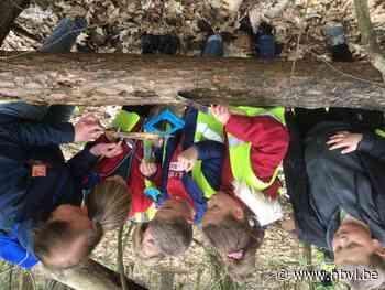 Leerlingen van De Driehoek gaan op zoek naar bodemdiertjes - Het Belang van Limburg