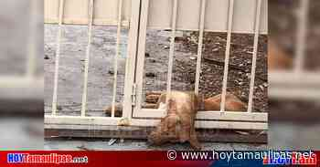 Exhiben abandono de perrito en Villas de San Miguel de Nuevo Laredo - Hoy Tamaulipas