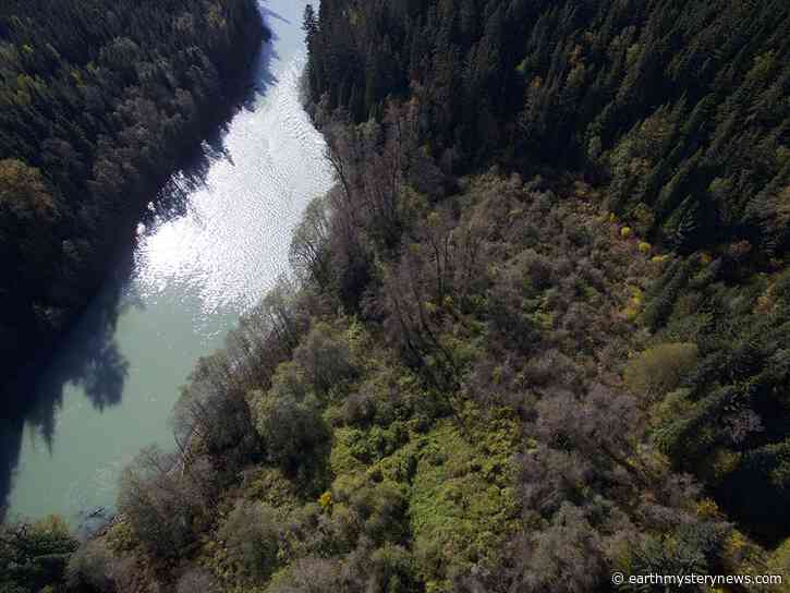 Ancient Indigenous forest gardens still yield bounty 150 years later: study