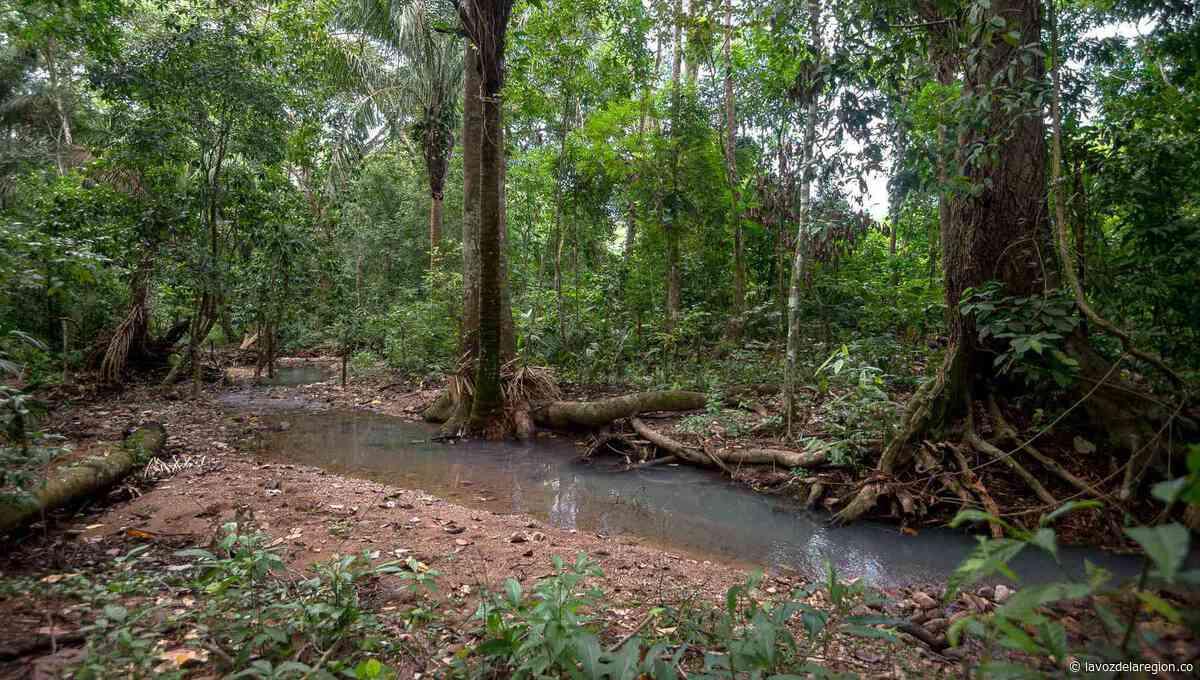 Contratarán personal para limpiar cuenca de una quebrada en Aipe - Huila