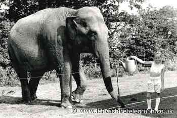 Tina the elephant was a jumbo attraction in Ribble Valley