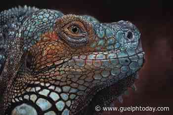 Love of animals leads Guelph artist to create hyper-realistic pet portraits - GuelphToday
