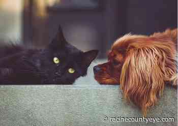 """North Shore Bank Launches """"For the Love of Animals"""" May Campaign - Racine County Eye"""