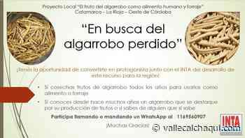 """""""En busca del algarrobo perdido"""" - vallecalchaqui.com"""