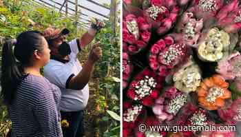 Miles de docenas de rosas de floricultores sanjuaneros serán exportadas a Estados Unidos - Guatemala.com