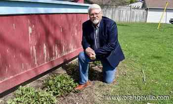 'We all have to eat': New Orangeville program encourages homegrown food - Orangeville Banner