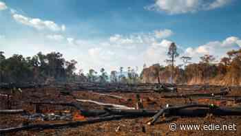 From Aldi to Waitrose: UK food giants threaten to boycott Brazilian suppliers over deforestation