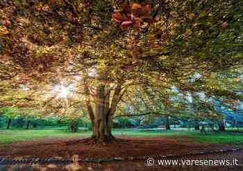 Il parco Bassetti a Gallarate - VareseNews - Varesenews