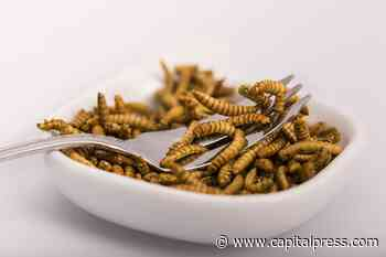 Mealworm — it's what's for dinner in EU | Agriculture | capitalpress.com - Capital Press