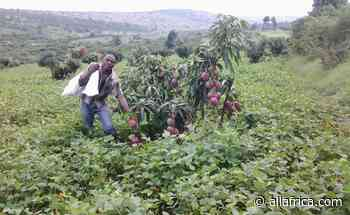 Africa: How Responsible Business Boosts the Agriculture Sector - AllAfrica - Top Africa News