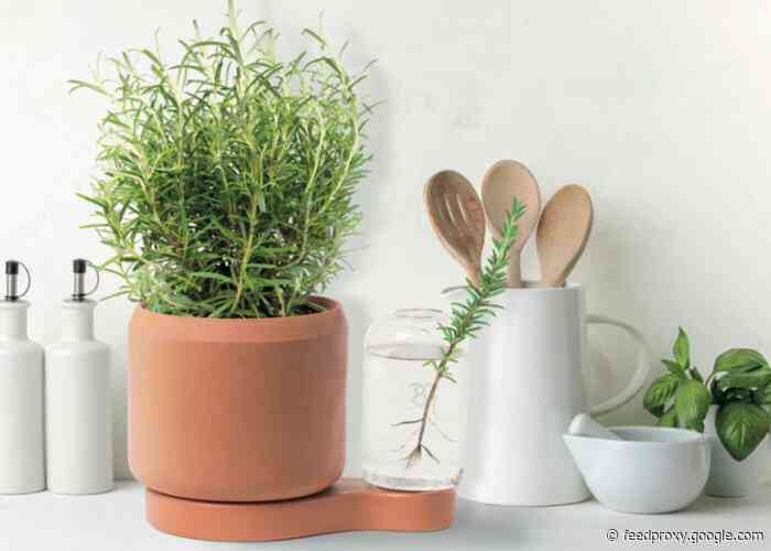 Greenfinity indoor plant pot lets you easily grow from cuttings
