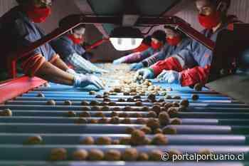 Concretan exportación de 200 toneladas de nueces producidas en San Felipe a Turquía - PortalPortuario