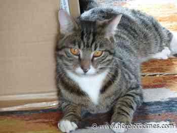 Please help us find our beloved cat Rafa