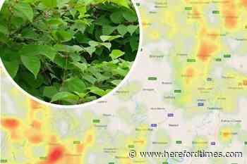 Revealed: Herefordshire's Japanese knotweed infestation hotspots