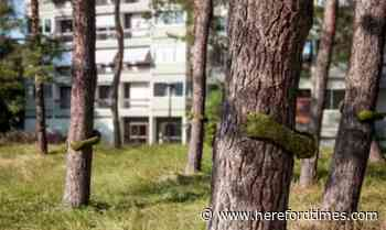 Look carefully! Are these trees being hugged?