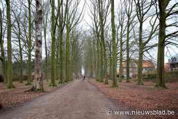 Historische bomendreef wordt vervangen omwille van NAVO-kero... (Boechout) - Het Nieuwsblad